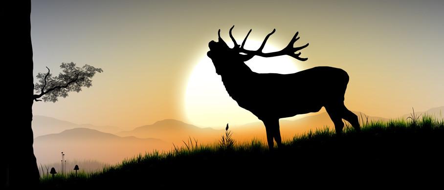 header_deer